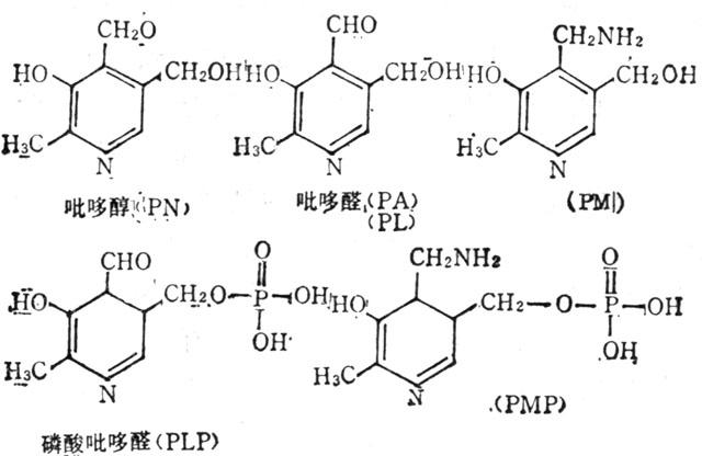 维生素B6及其辅酶的结构式