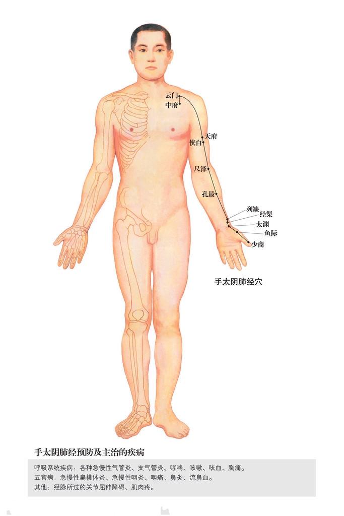 手太阴肺经穴位图