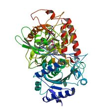 PBB Protein PCK1 image.jpg