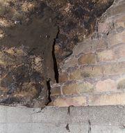 Cladosporium cellar