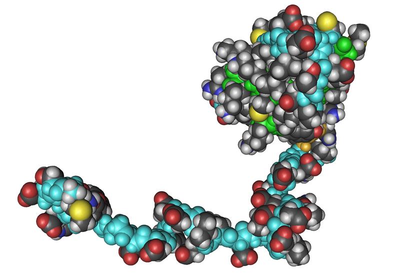 文件:1QKL Essential Subunit Of Human Rna Polymerases I IiAnd Iii 01.png