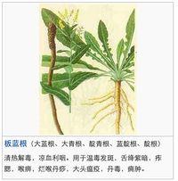 中藥圖典.jpg