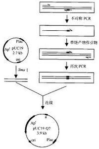 Bk86f.jpg