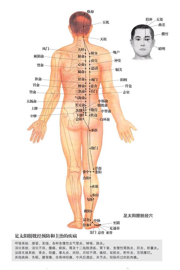 足太陽膀胱經穴位圖