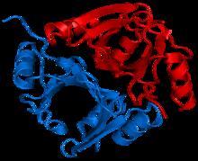 Methylmalonyl-CoA epimerase 1JC5.png