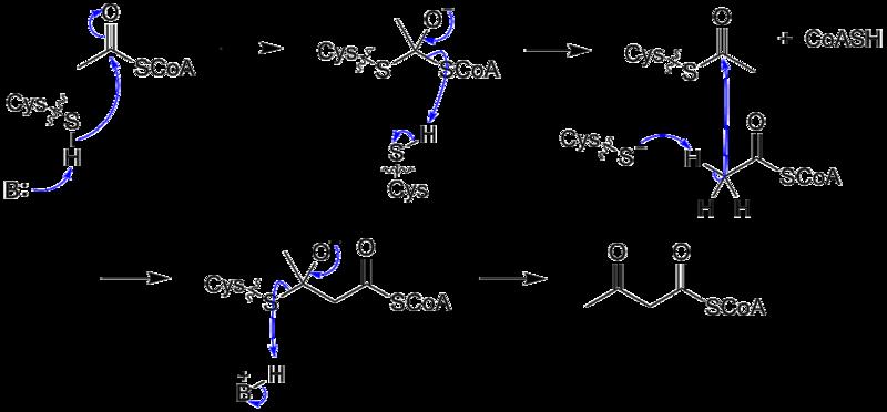 文件:AcetylCoA-AcetoacetylCoATransformation.png