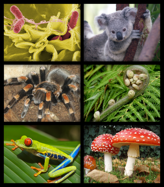 文件:Biology organism collage.png