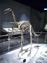 古似鳥龍的骨架,位於香港科學館