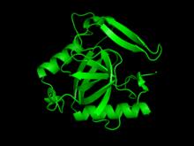 Inorganic pyrophosphatase.png
