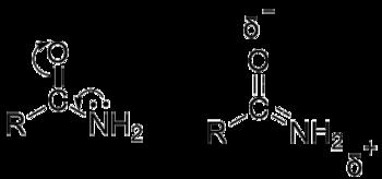 酰胺2.png