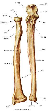 状 尺骨 突起 茎 手の浮腫評価・周径測定について作業療法士が解説(8の字法)