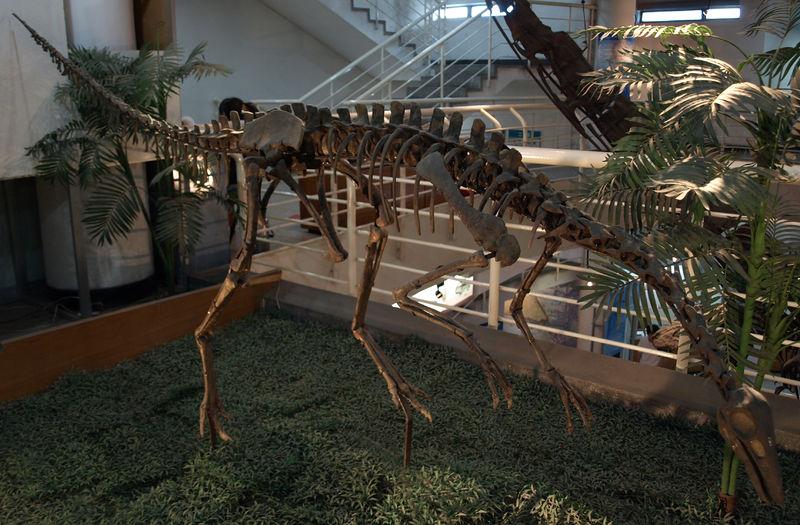 文件:ArchaeornithomimusAsiaticus-PaleozoologicalMuseumOfChina-May23-08.jpg