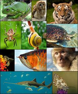 由左至右,由上至下开始:白氏树蛙、灰林鸮、东北虎、花园十字蛛、花园葱蜗牛、绿蠵龟、独居蜂、亚洲龙鱼、巴巴利猕猴、锯鳐和加勒白眼蝶
