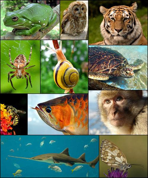 文件:Animal diversity October 2007.jpg